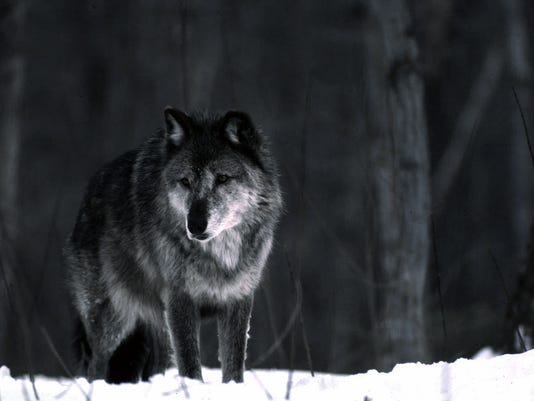 wolves3