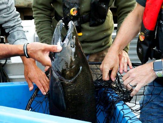 Lummi tribal members and Washington Department of Fish