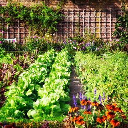 How to become a master gardener: Volunteer