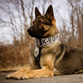 Batavia Police K-9 dies after being accidentally struck by car Monday