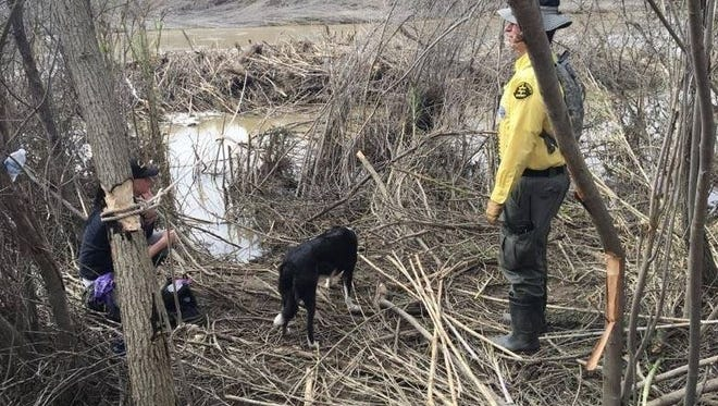 Monterey County Sheriff's Office search and rescue teams have looked for a person knocked into the Salinas River throughout the week.