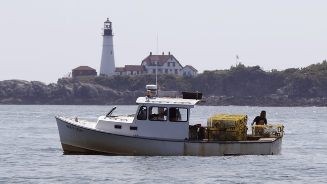 A lobsterman tends to his traps off Cape Elizabeth, Maine. That state's lobster fishery has had its certification as sustainable revoked because of its impact on critically endangered right whales.