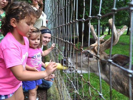 With her sister Rhya looking on, 4-year-old Tinley Eastman fed a cob of sweet corn to one of the resident bucks at Bruemmer Park Zoo during the annual Zoobilee fundraiser last weekend.