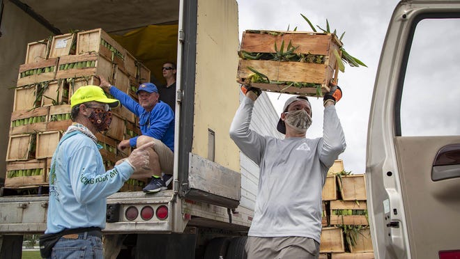 Ben Morris, Wellington, (right) loads a crate of sweet corn into car at the 20th annual Sweet Corn Fiesta at the South Florida Fairgrounds on April 26, 2020.