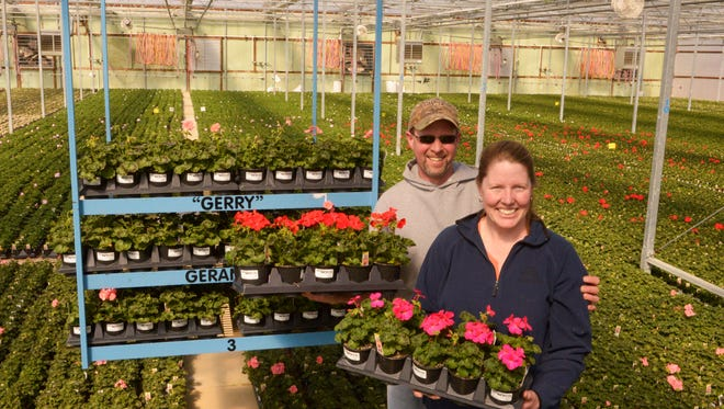 Geranium farmers Colleen and Jeff Loppnow pose with violet and red geraniums inside their greenhouse in Reedsville on Tuesday. Sue Pischke/HTR Media.ÊPhoto taken on Tuesday, March 31, 2015.
