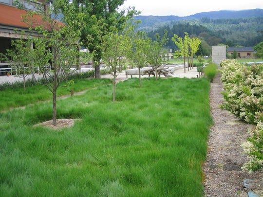 bunch grasses
