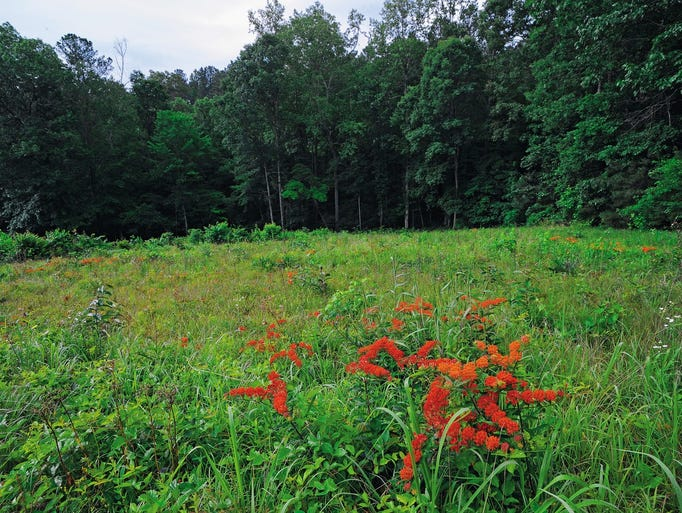 Follow in the footsteps of soldiers at Civil War battlefields
