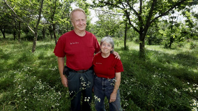 Tom Wahl and wife Kathy Dice, who own Red Fern Farm, stand amid a group of chestnut trees Thursday on the farm north of Wapello. The couple created Red Fern Farm on the outskirts of the village of Grandview in 1986 when the transplants to the area were looking for a place to build a home and their own land to wander and hunt. Red Fern is not dependent on any single species, and harvesters will find a variety a nuts and berries available throughout the harvesting season. There are walnuts as well as persimmons, Heartnuts, Asian pears and other exotic and native trees.