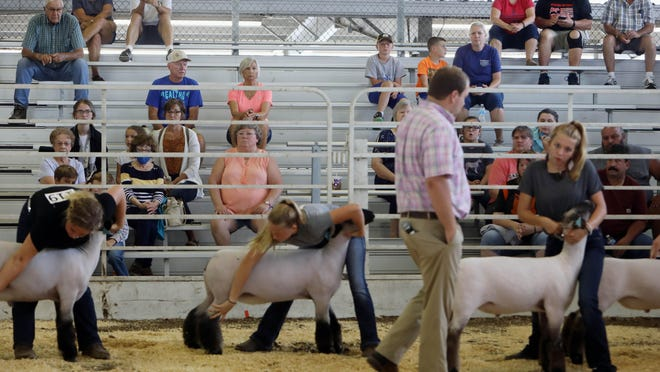 Family members watch as Derek Phenningsen judges the sheep show during the Des Moines County Fair Monday on the fairgrounds in West Burlington. This year's fair looks different from previous fairs due to COVID-19 restrictions, the fair is closed to the public, social distancing signage as well as hand sanitation stations were placed throughout the fairgrounds.
