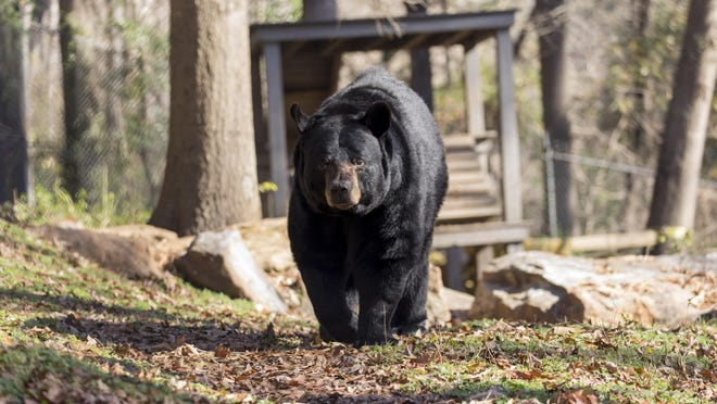 Bear Hollow Wildlife Trail at Memorial Park in Athens is home to around three dozen animals native to the Southeast.