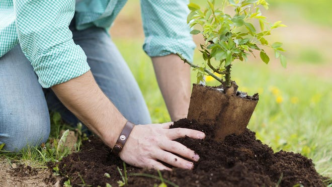 Trees and shrubs add beauty and value to a home's landscape.If they are improperly planted however they can bring headache and worry.