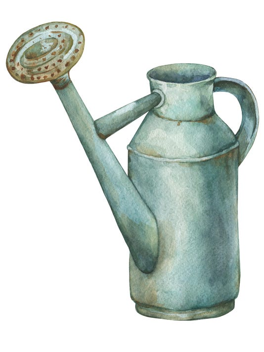 Gardening tools rusty tin watering can for watering flowers. Hand drawn watercolor painting on white background.