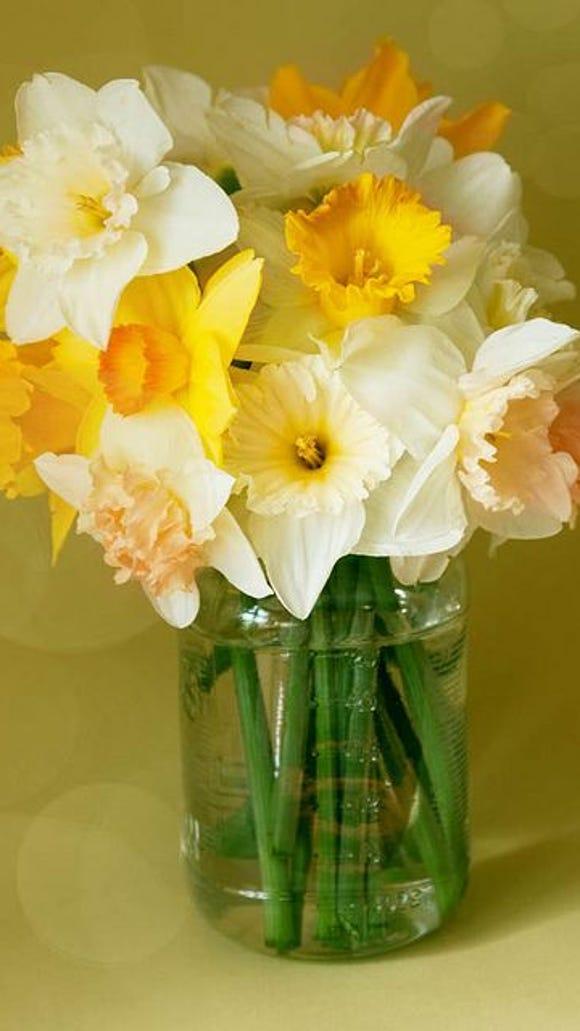 Daffodil Centerpiece