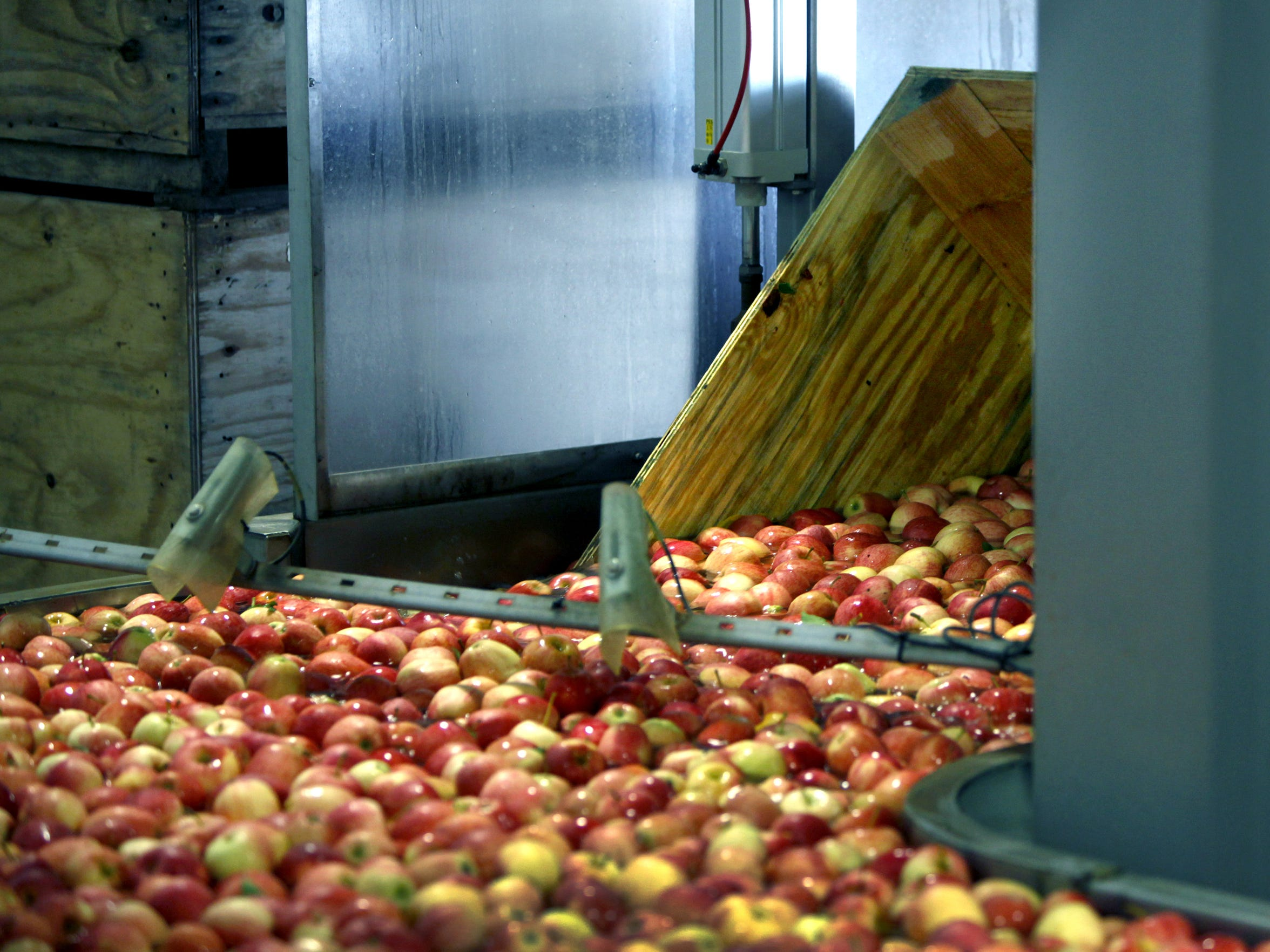 Bins containing Gala apples at Empire Fruit Growers