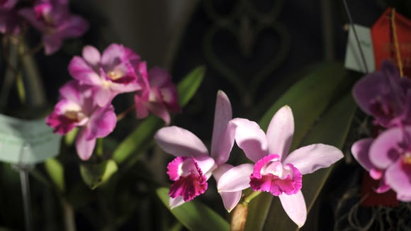 The 18th annual WNC Orchid Society's Asheville Orchid Festival is April 15-17 at the N.C. Arboretum.