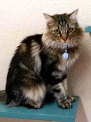 Karina is available for adoption with Sun Cities 4