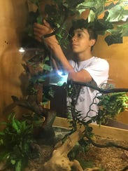 Dallas Dotson, 14, removes a chameleon, Karma, from