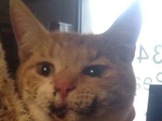 burned cat cropped.jpg