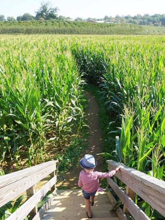 Get Lost In These 5 Corn Mazes In New Jersey