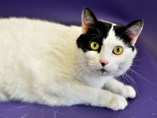 stc-0625-pet-of-the-week-sunday-paige-2-34599539.jpg