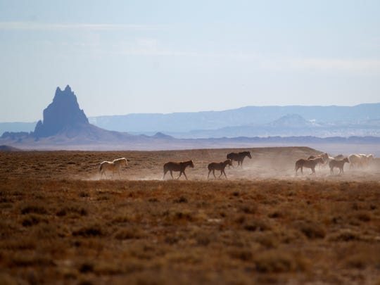 Wild horses are pictured on Monday, Feb., 26, 2018 in Shiprock.