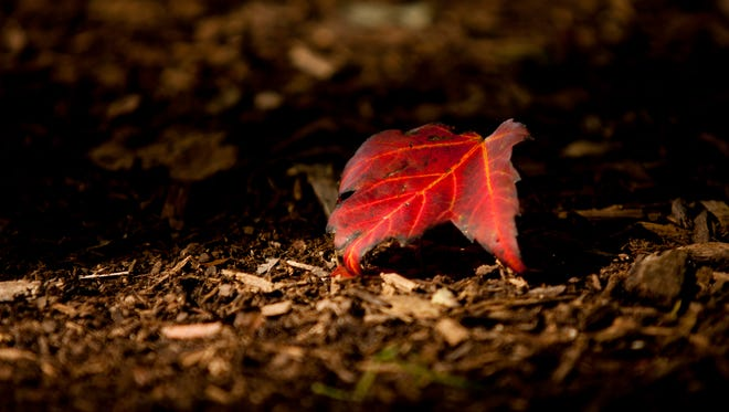 A leaf rests on the ground in a ray of sunlight at the Pine River Nature Center in Goodells.