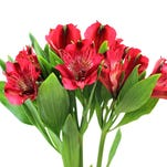 Flowers Speak