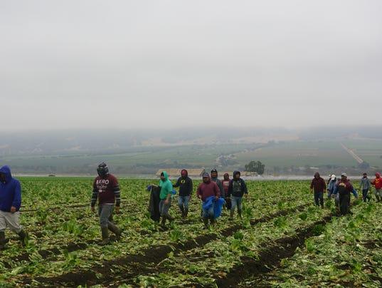 Farmworkers at a farm in Soledad