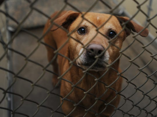 Cruise peers out of his kennel Monday at the Ross County Humane Society.