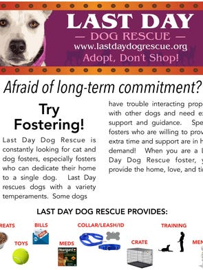 Last Day Dog Rescue Adoption Fees