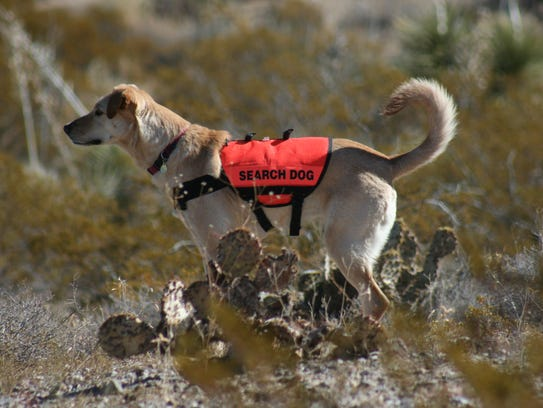 Trixie is one of the dogs on the Mesilla Valley Search