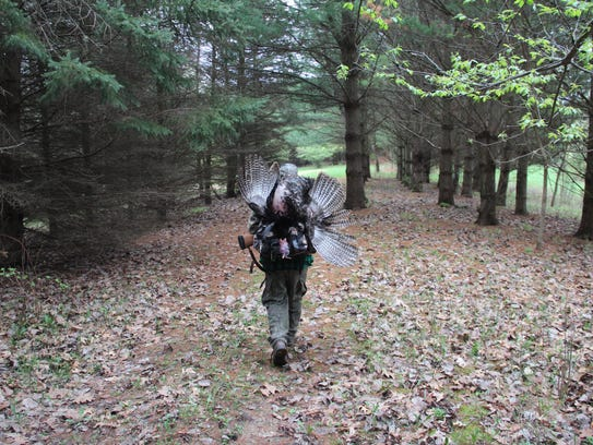 A hunter carries a wild turkey after a successful hunt