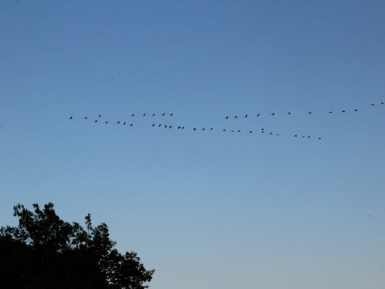 A flock of Canada geese flies over the Menomonee River