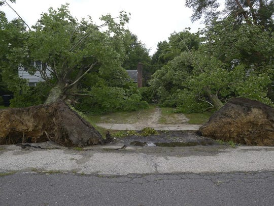 Winds during Tuesday's storms toppled trees in Mantua.
