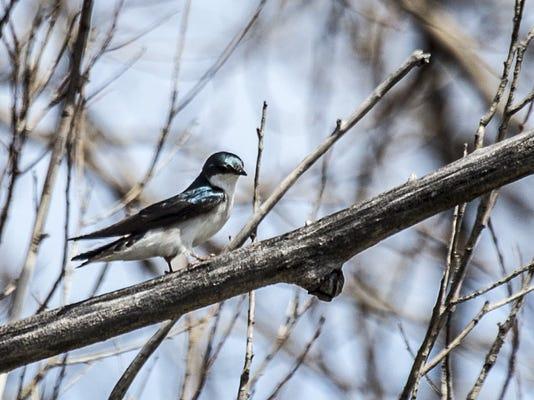 DFP bird migration (5).JPG