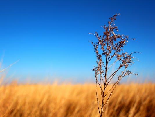 versteeg-meredith-winter-hues.jpg