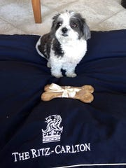 Call ahead and your room at The Ritz-Carlton Golf Resort, Naples will be stocked with a personalized pet dish, a plush dog bed and treats.