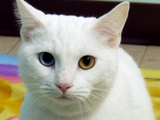 Ginger is 2 years old. She is beautiful solid white,