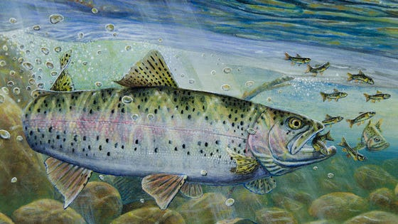 The 2020 Trout Stamp contest winner was created by Melissa Mickelson.