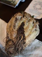 """Author Jeff Maulhardt brought a sugar beet with him to a signing of his new book, """"Oxnard Sugar Beets,"""" at Bank of Books in Ventura recently."""