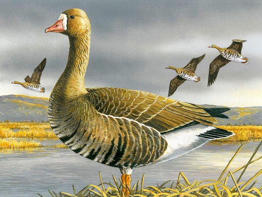 Duck Stamp Contest Wi_Giff.jpg