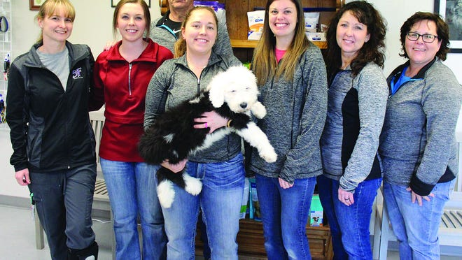 Veterinarians, tech and office staff members of South Fork Veterinary Hospital in Pratt are excited about opening a satellite vet office in St. John, a place with home connection for many of them. (From left) Tiffany Halderson, Milan Black, Shan Hullman (D.V.M.), Laramie Clements (front, holding Old English Sheepdog puppy Dugan), Anamarie Weber (D.V.M.), Shelley Hullman and Gina Roberts all plan to be present at the Grand Opening in St. John, 4-7 p.m. on Thursday, March 5.