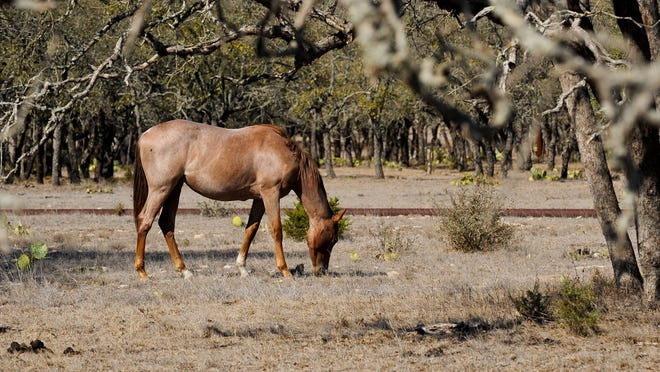 Proposed horse slaughter plants in New Mexico and other states may not be able to operate under the federal budget, which does not provide funding for plant inspectors.