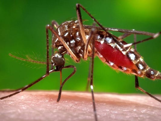 Nj Reports Sharp Rise In Mosquitoes With West Nile Virus