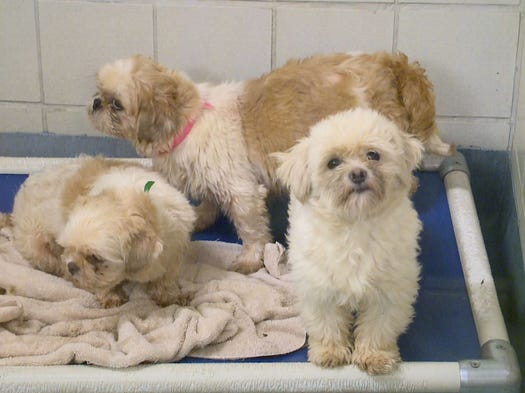 More than 350 dogs were seized from a home in Cherokee County