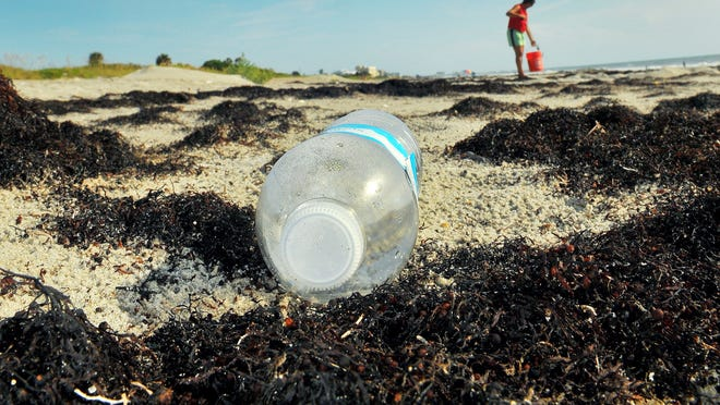 """Members of the Surfrider Foundation say that instead of raking seaweed from beaches, the """"wrack line"""" should be preserved and junk including bottles or cans removed."""