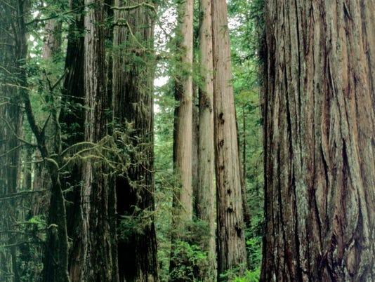 635701636509962310-trees