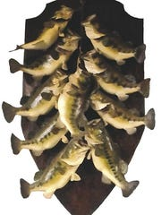 John Lee Smith once caught 10 bass, weighing 86 pounds,