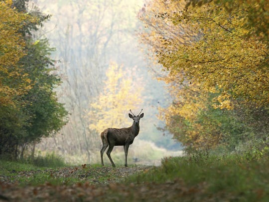 Tennessee has a large deer population, and there is an abundance of deer in Middle Tennessee, thus increasing the impact of the Hunters for the Hungry program.