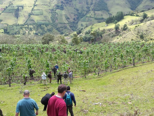 A group of American law enforcement officers accompany Colombian federal police on a tour of an opium poppy field in Colombia on a recent trip run by the Drug Enforcement Administration.